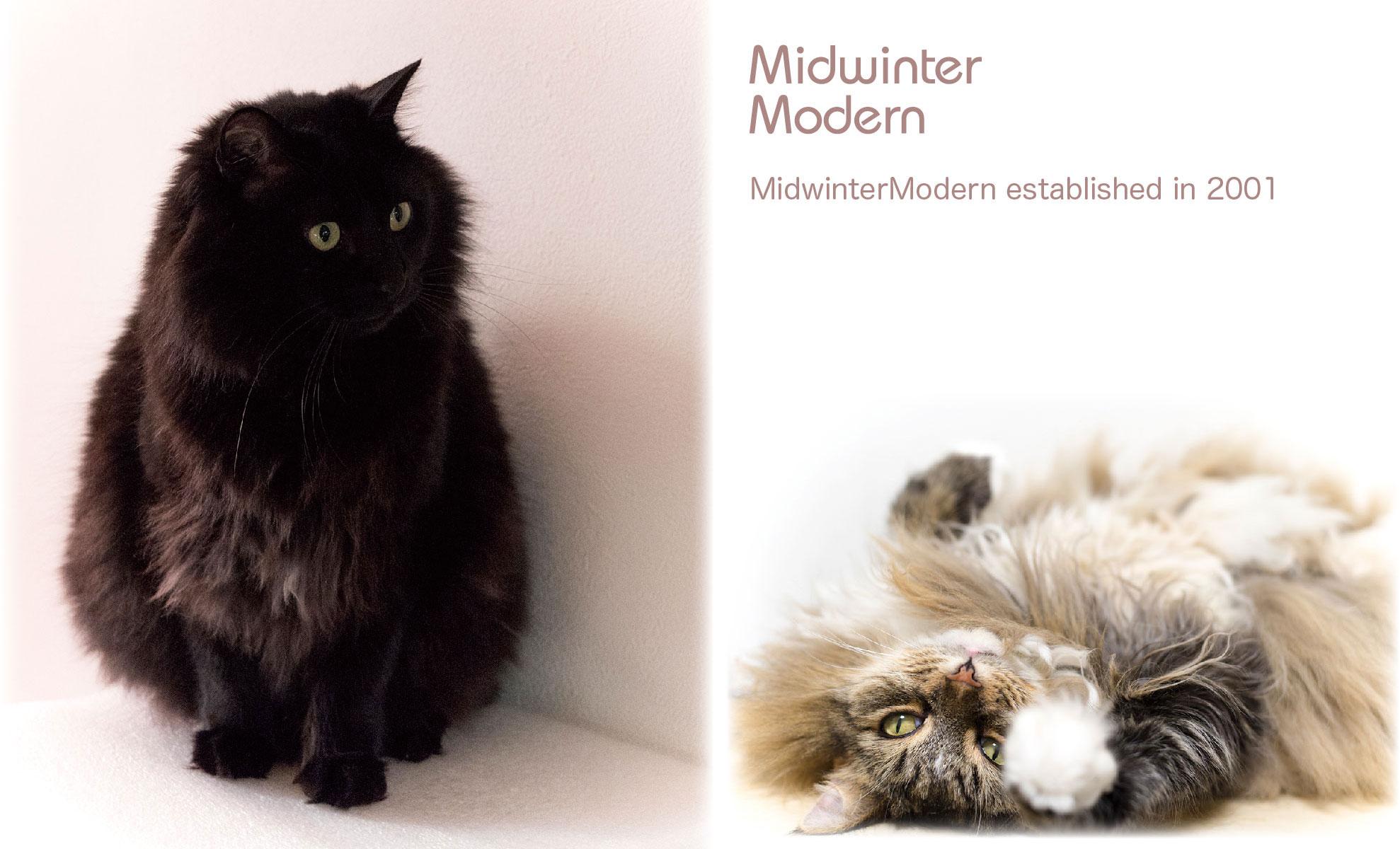 Midwinter Modern